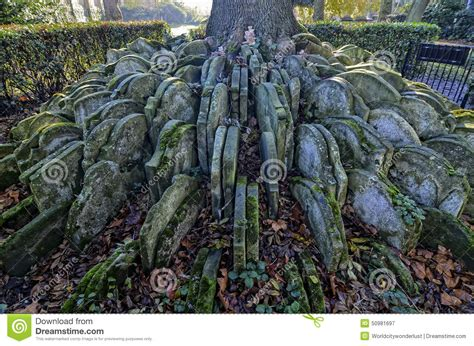 tree of rubber st hardy s tree stock image image of graveyard