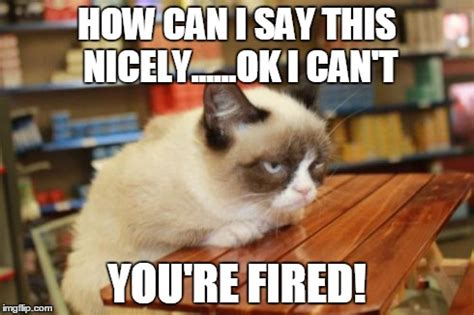 You Re Fired Meme - grumpy cat table memes imgflip
