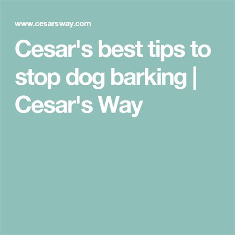 how to stop dog barking when left alone cesar s best tips to stop dog barking barking dog