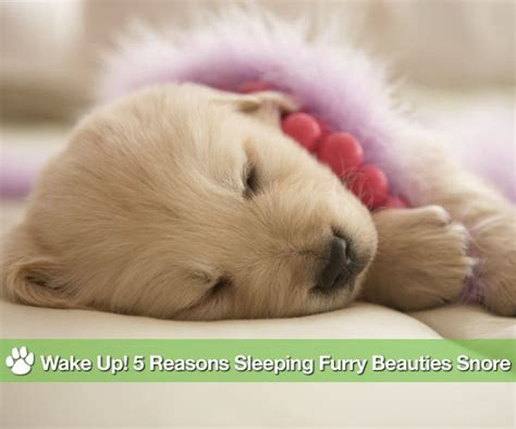 why do dogs snore why do dogs snore popsugar pets