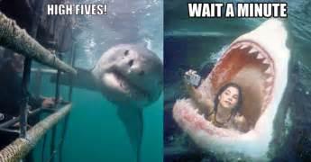 Meme Shark - hilarious shark memes on instagram vix