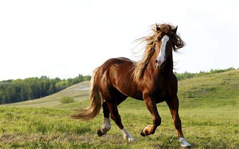 imagenes surrealistas de caballos hermosos caballos corriendo im 225 genes de animales fotos