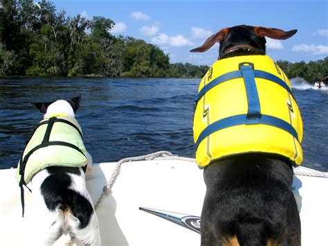 dog boat life jackets tips to keep your dog safe on a boat hill s pet