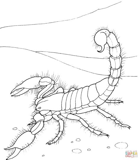 desert coloring pages for kids az coloring pages giant desert scorpion coloring page supercoloring com