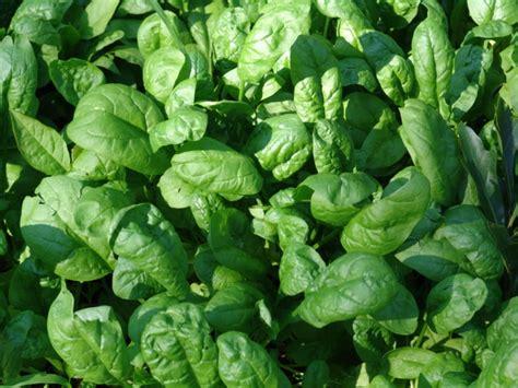 alimenti che aiutano il metabolismo 20 cibi che aumentano il senso di saziet 224 e il metabolismo