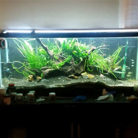 driftwood aquascape design just rescaped my 55 gallon aquarium to be a little less