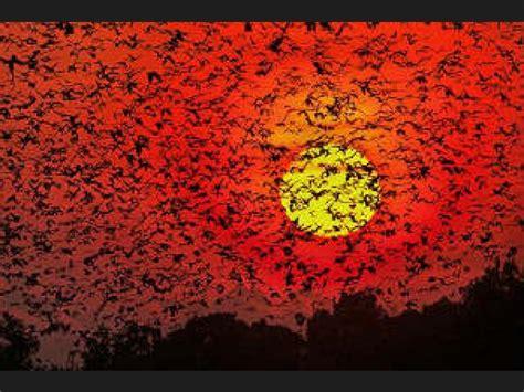 imagenes de aves asombrosas lista asombrosas migraciones de animales