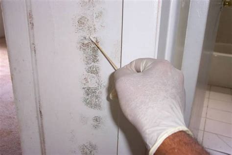 how to check your house for mold how to use the viable mold kit