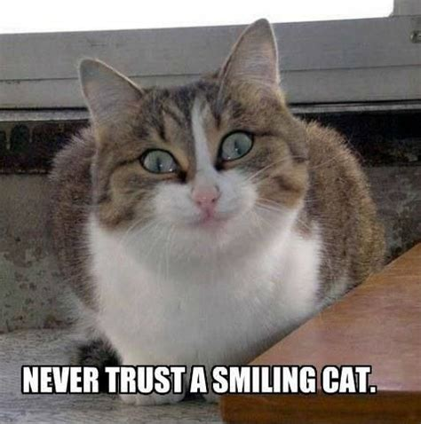 Smiling Cat Meme - smiling cat memes image memes at relatably com