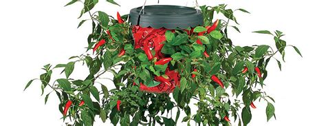Hanging Pepper Planter by Topsy Turvy Pepper Planter The Green