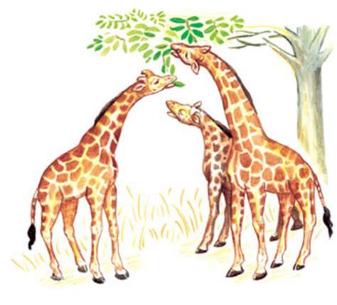 imagenes de las jirafas de lamarck cultura cient 237 fica el origen y la evoluci 243 n de la tierra