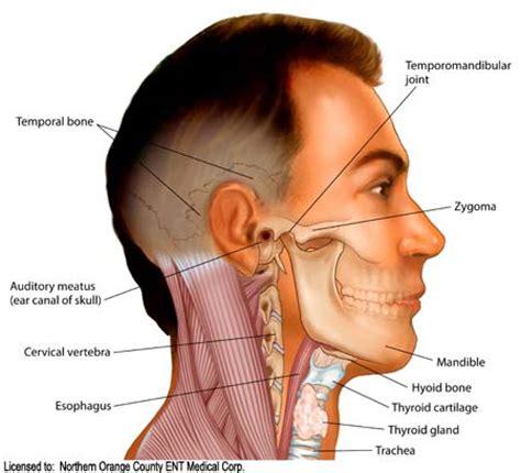 Buku Anatomi Untuk Kedokteran Gigi Kepala Dan Leher bagian bagian tulang kepala dan tulang leher belajar oh belajar