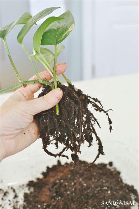 Planter Soil by Diy Kokedama Japanese Moss Planters Sand And Sisal