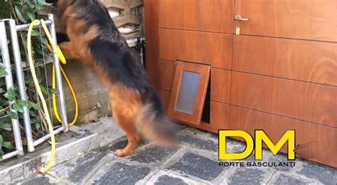 porta cani d m a porte basculanti per i vostri animali