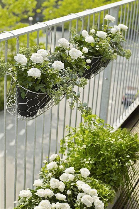 fiori resistenti fiori e piante ecco alcune fra le specie pi 249 decorative e