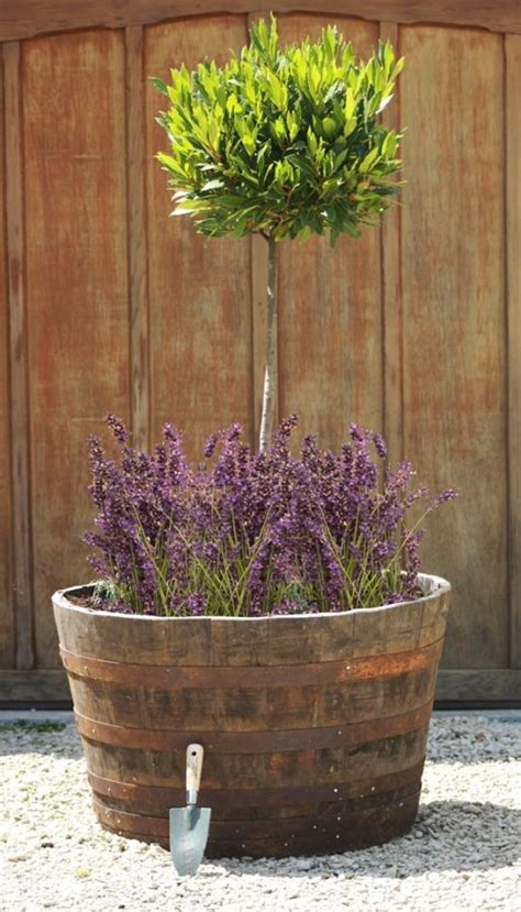 Half Whiskey Barrel Planter by Large Rustic Half Whiskey Barrel Oak Planter D90cm