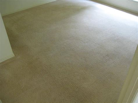 urine rug water and urine affected carpets