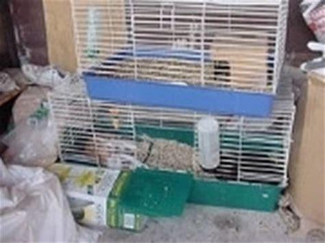 coniglio in gabbia gabbia conigli nani conigli nani