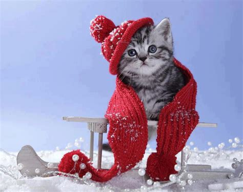 wallpaper cats christmas winter kitten wallpaper wallpapersafari