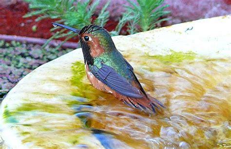 attract birds with birdbaths all about birds