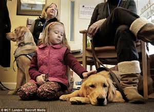 golden retrievers newtown ct hook shooting comfort dogs cuddle up to newtown children and their parents