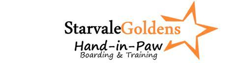 golden retriever breeders in vermont vermont golden retrievers and puppies starvale goldens in paw kennels
