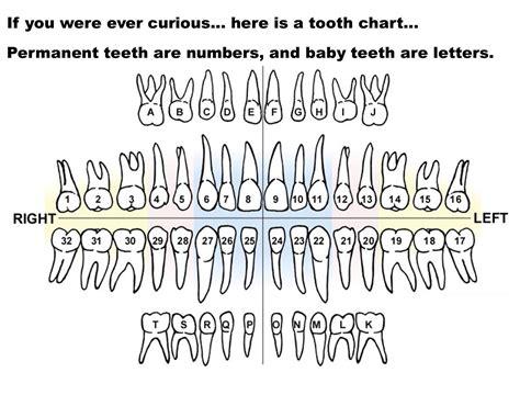 Teeth Letters printable diagrams of teeth diagram site