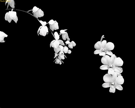 wallpaper black and white flowers pretty black and white flower backgrounds bouquet idea