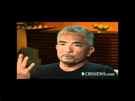 cesar trainer leader of the pack cesar millan funnydog tv