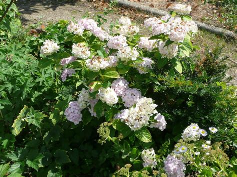 le jardin fleuri de catherine le jardin de gisounette