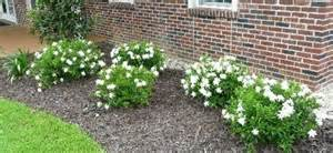 Flower And Patio Show Gainesville Landscape Plant Of The Month Frost Proof