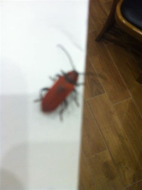 insetti volanti insetti volanti in casa pestforum