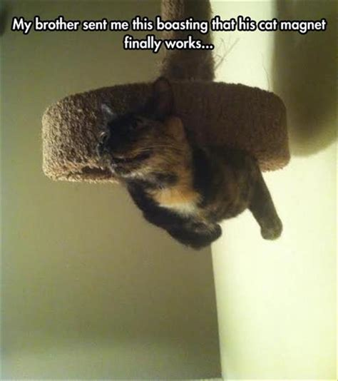 Magnets Meme - funny animal pictures of the day 24 pics