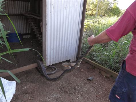 The Chook Shed by 5 Solid Ways To Protect Chook Sheds And Bird Aviaries From