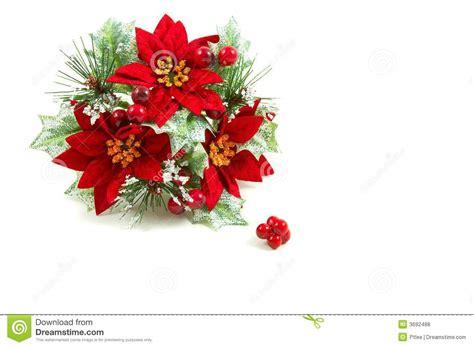 imagenes flores de navidad guirnalda de la navidad flores del poinsettia foto de