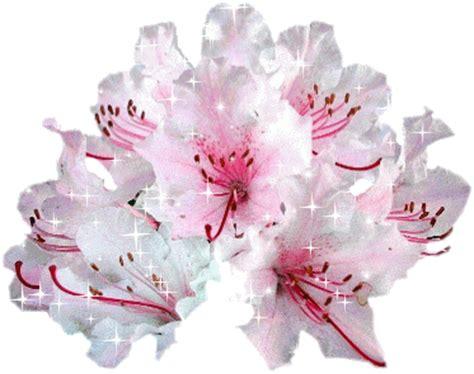 Fleur De L Amitié by La Fleur De L Amitie Pour Vous Remercier