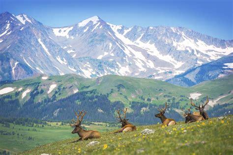 cing near rocky mountain national park cabins near