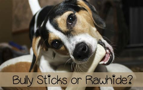 best rawhide for puppies bully sticks vs rawhide best chews for dogs