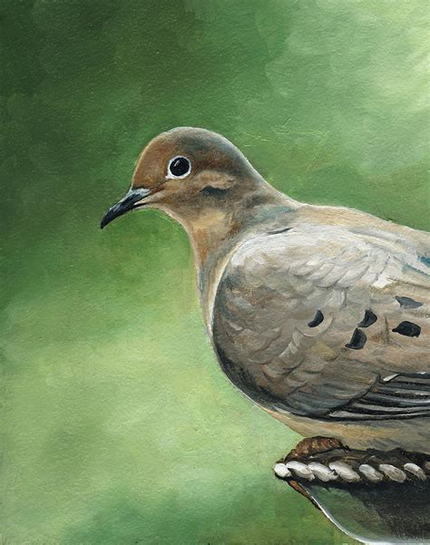 mourning dove by yealey