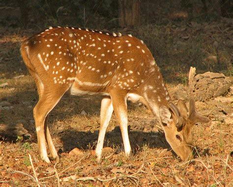 La Faune Resorts Kanha India Asia flora and fauna janardan resort