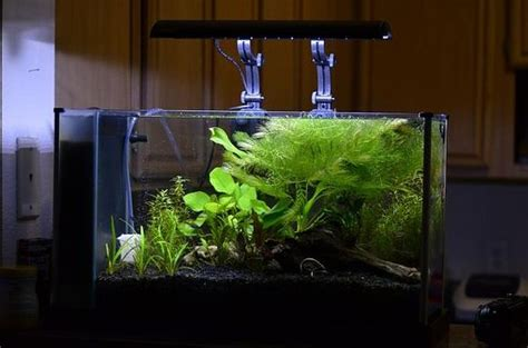 fluval spec aquascape fluval spec v idea aquascaping aquarium pinterest ideas