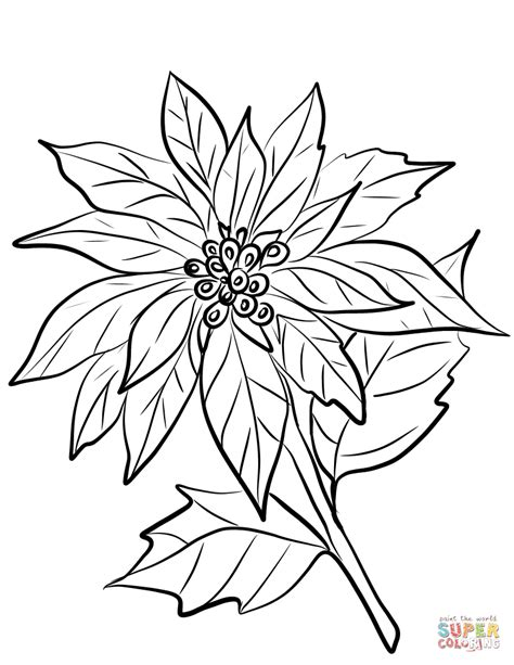 poinsettia leaves coloring pages poinsettia leaf coloring pages coloring pages