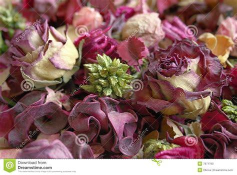 imagenes de flores secas imagenes de rosas secas fondo de flores secas fotos de