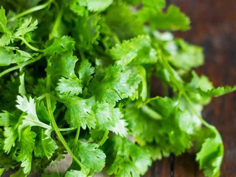 Do Cilantro Metal Detoxs Work by How To Flush Out Heavy Metals From Your Boldsky