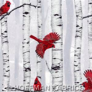 Woodsy winter cardinals and birch trees