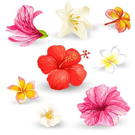 foto di fiori da scaricare gratis foto da scaricare gratis di fiori 187 hd maps locations