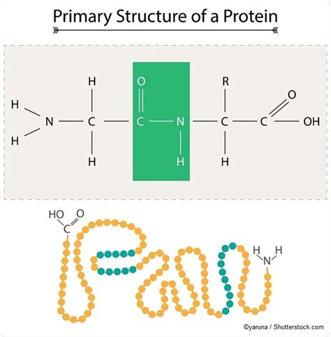 protein macromolecule macromolecules polysaccharides proteins and nucleic acids