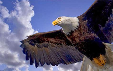 imagenes animales y naturaleza animales y paisajes fotos de naturaleza animales