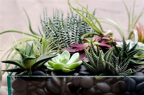 composizioni floreali in vasi di vetro composizioni di piante grasse in vasi di vetro kq01