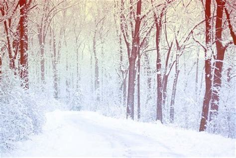 themes tumblr winter gallery for gt tumblr winter backgrounds woodland and